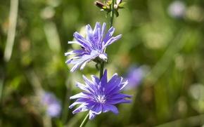 Picture flower, macro, bokeh, flora, mmd, boke, helios