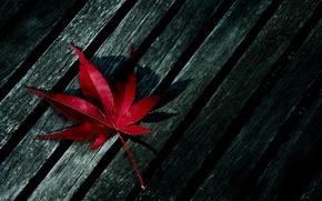 Wallpaper red, sheet, tree