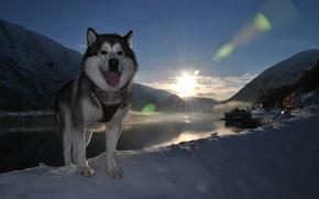Picture language, snow, landscape, each, dog, dog