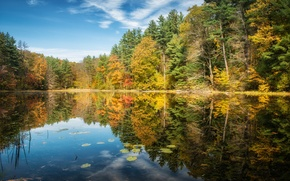 Picture autumn, forest, trees, lake, reflection, Connecticut, Norfolk
