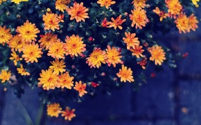 Wallpaper flowers, yellow, orange, water drops, bokeh