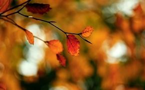 Picture autumn, macro, glare, foliage, branch