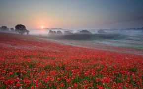 Picture the sun, trees, sunset, flowers, fog, Maki, Field, the evening, red, haze, cloudless sky
