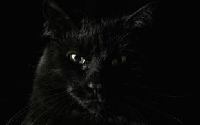 Picture animals, fear, Koshak, black