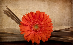 Picture flower, style, background, book