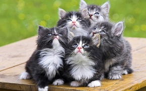 Picture look, kittens, fluffy