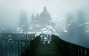 Picture birds, bridge, the city, fog