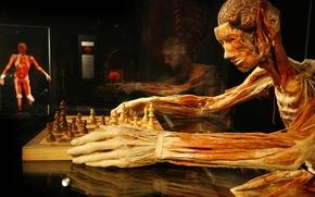 Picture chess, Gunther von Hagens, Gunther von Hagens, the plastinated, chess player