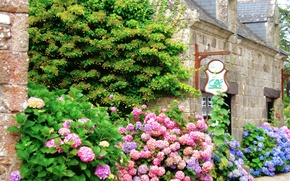 Picture flowers, the city, The bushes, flowers, street, street, town