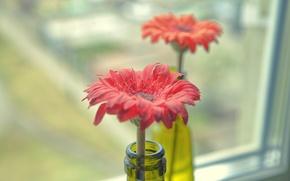 Picture flowers, window, bottle, flowers, the neck, flower