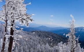Wallpaper Mountains, forest, winter