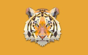 Picture abstraction, tiger, minimalism, head, tiger