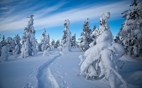 Picture winter, snow, trees, traces, path, Finland, Finland, Lapland, Lapland