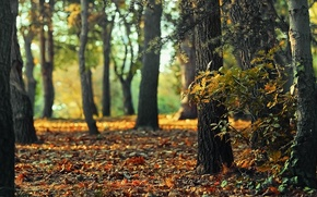 Picture autumn, forest, light, nature, bokeh