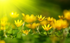 Wallpaper bokeh, petals, rays, flowers
