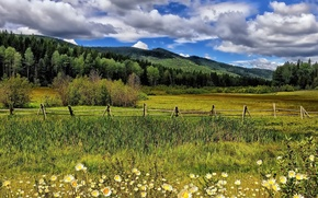 Picture flowers, chamomile, the fence, mountains, meadow, trees, clouds