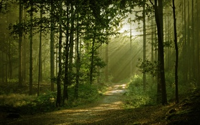 Picture forest, light, nature, trail