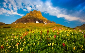 Picture the sky, clouds, flowers, plants, Mountain, valley