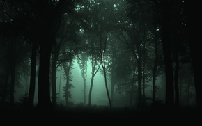 Picture forest, trees, night