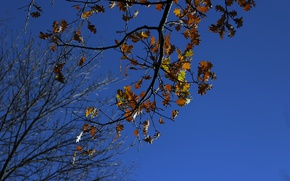 Picture real photo, autumn, mood, the sky