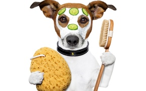Picture dog, humor, paws, mask, white background, collar, cream, slices, brush, cucumbers, Jack Russell Terrier