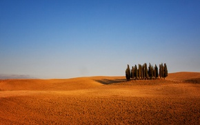 Picture trees, Italy, Tuscany, arable land