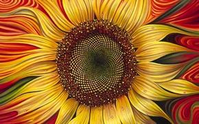 Picture background, sunflower, Ricardo Chavez Mendez