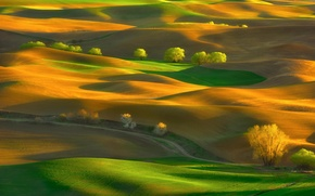 Picture trees, hills, field, spring, May, Washington, USA, carpets, state, Steptoe Butte State Park