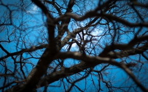 Picture the sky, light, branches, tree, Wallpaper, web, depth, spring, wallpaper, sky, nature, tree, spring, web, …