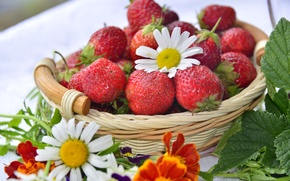 Picture berries, basket, Daisy, strawberry, marigolds