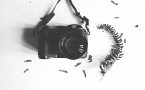 Picture camera, leaf, lens