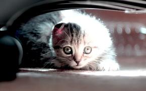 Picture animals, cat, kitty, kitten, cat