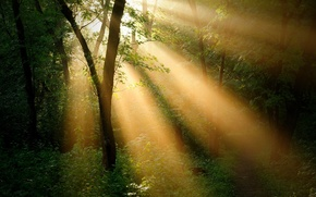 Picture forest, landscape, ray, trees. the sun