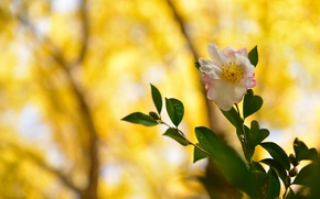 Picture flower, leaves, branches, background, pink and white