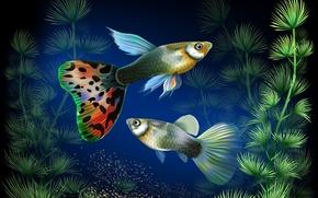 Picture fish, algae, aquarium, vector, under water