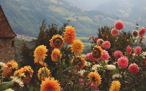Picture summer, flowers, mountains, orange, yellow, pink