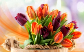 Wallpaper flowers, tulips, basket