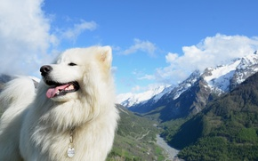 Wallpaper the sky, mountains, dog