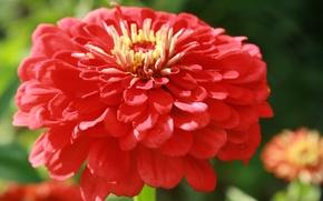 Wallpaper red, flowers, garden, nature, petal, flower, petals, plant