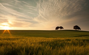 Picture greens, the sky, grass, leaves, the sun, clouds, macro, trees, nature, background, tree, widescreen, Wallpaper, ...