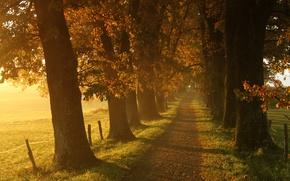 Picture autumn, grass, leaves, the sun, light, trees, landscape, nature, track, grass, trees, landscape, nature, autumn, …