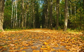 Picture The sky, Road, Autumn, Trees, Forest, Leaves, Trail, Spruce, Height, Falling leaves, Nature.Plants, Alive