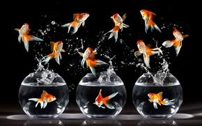 Wallpaper fish, rendering, aquarium, gold