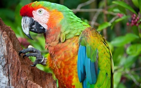 Picture bright, bird, parrot, colorful