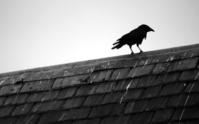 Picture roof, minimalism, Raven