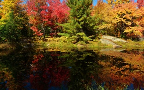 Picture autumn, forest, the sky, trees, pond, stones