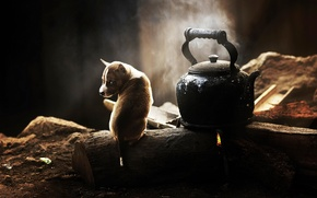 Picture kettle, puppy, dog