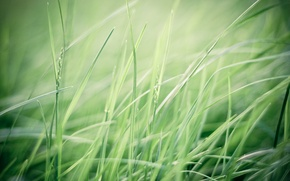 Picture greens, field, grass, macro, nature, the wind, green, plants