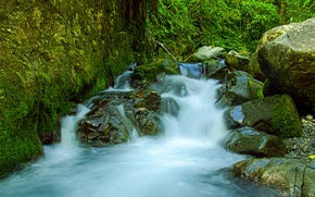 Picture greens, forest, stream, stones, moss, Mexico, Tres Marias
