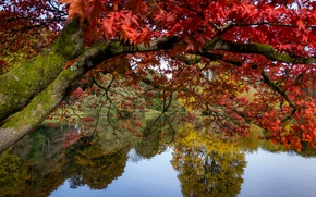 Picture autumn, trees, branches, lake, pond, Park, reflection, tree, England, maple, Stored, England, Wiltshire, Stourhead Garden, …